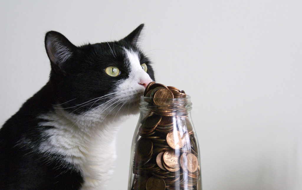 Cat enjoying a coin jar