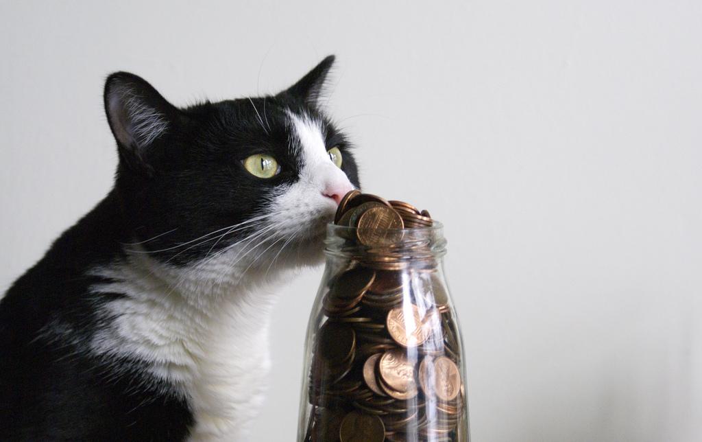 Cat enjoying a coin jar