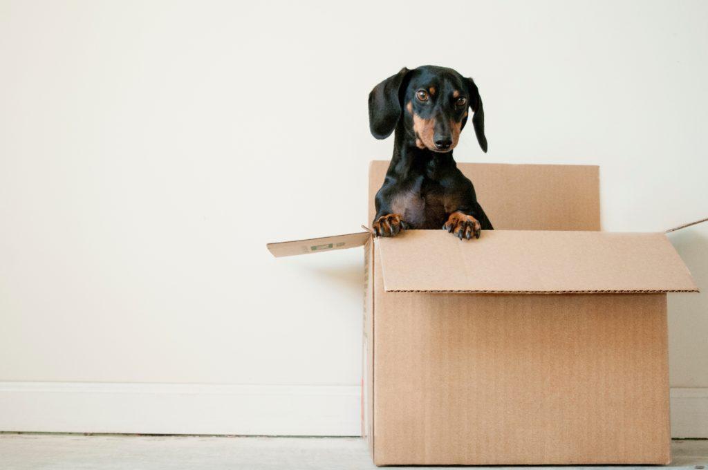 Puppy in a box, dawwwwwwwww