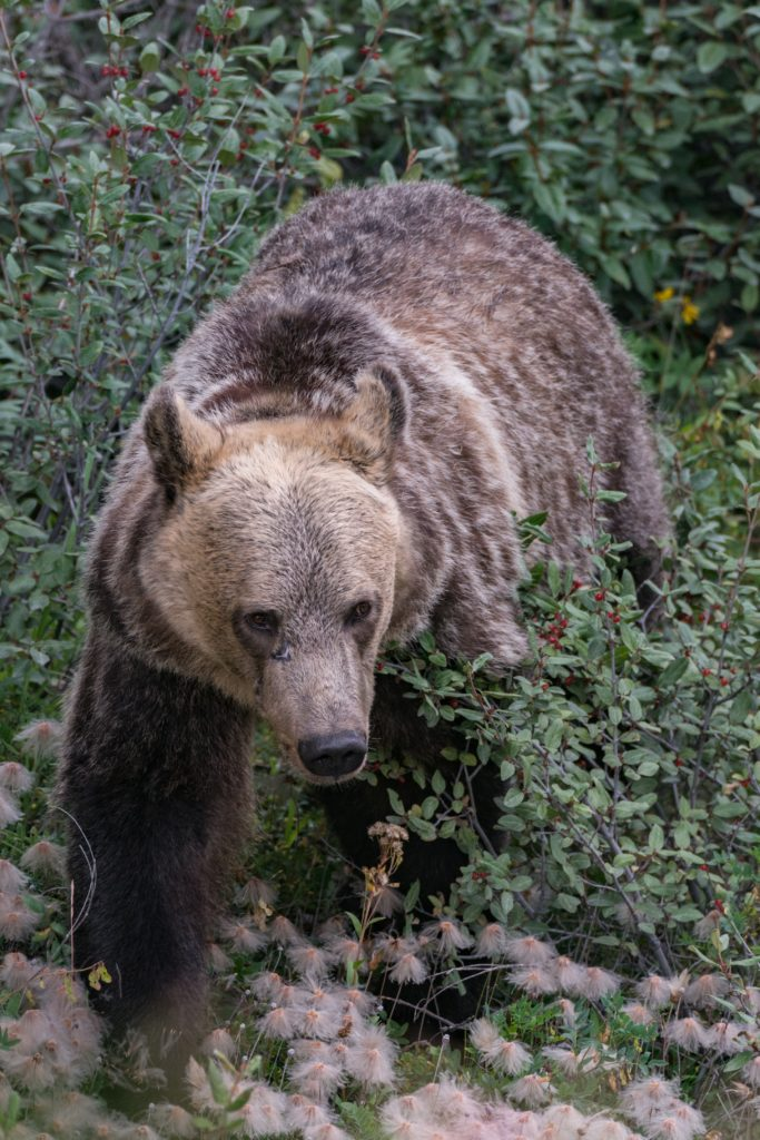 W-4 Withholding Bear Doesn't Want You to Have a Tax Refund